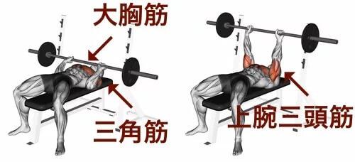 ベンチプレスで鍛える事が出来る筋肉の部分