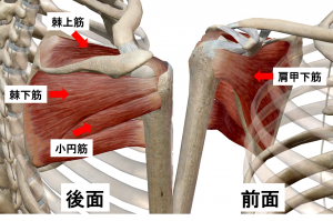 肩関節のインナーマッスル