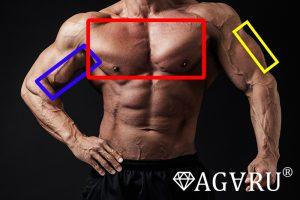 パームカールで鍛えられる筋肉