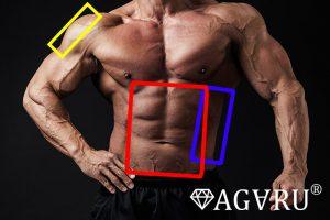 ダンベルバイシクルパンチで鍛えられる筋肉