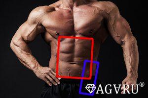 ダンベルVシットアップで鍛えられる筋肉