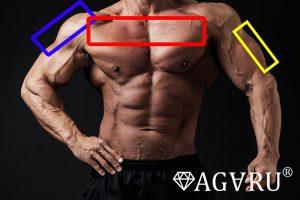 デクラインダンベルベンチプレスで鍛えられる筋肉