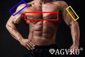 デクラインベンチプレスで鍛えることのできる筋肉