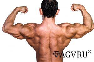 ワンハンドダンベルローイングで鍛えられる筋肉