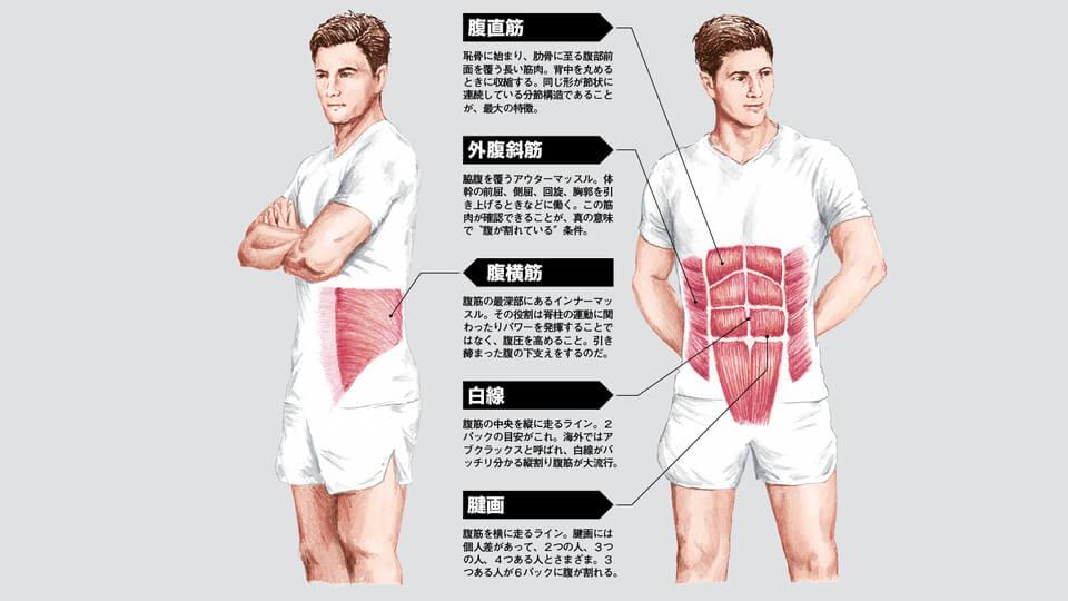 腹筋の解説